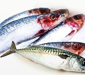 Ghol Fish,Ghol Fish Su...
