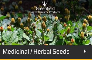 saaraketha an organic agro forestry company