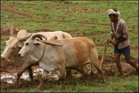 Farmer agric
