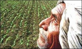 Farmer.9.jpg
