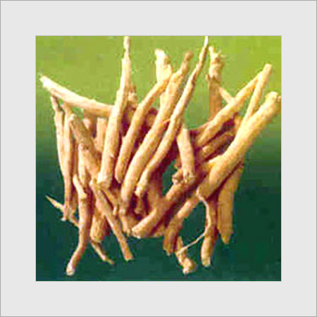 Image result for pictures of indian ginseng