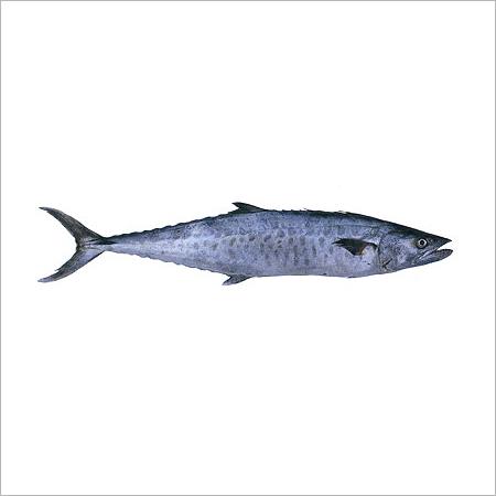 seer fish king fish in safdarjung development area new