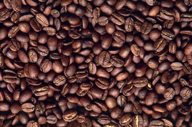 Indian Coffee Beans in Bengaluru, Karnataka, India - MKC FOOD PRODUCTS