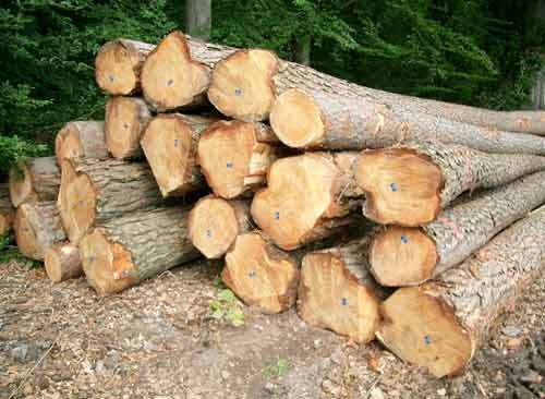 Pine Wooden