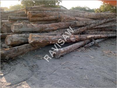 Imported Teak Round Logs