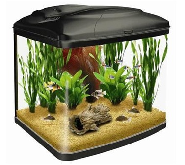 Imported Molded Aquarium in Kolkata, West Bengal, India - Nemos World