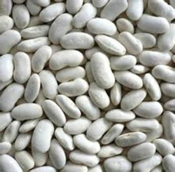 White Kidney Bean
