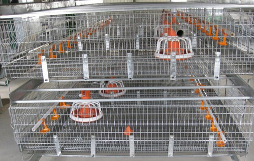 Broiler Chicken Cage For Poultry Farm