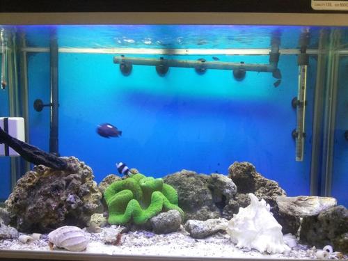 Wholesale Aquarium Supplies Aquarium Supplies Wholesalers