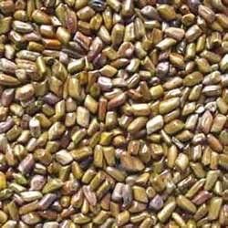 Semen Cassia Torea Seed