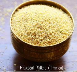 Red Foxtail Millet