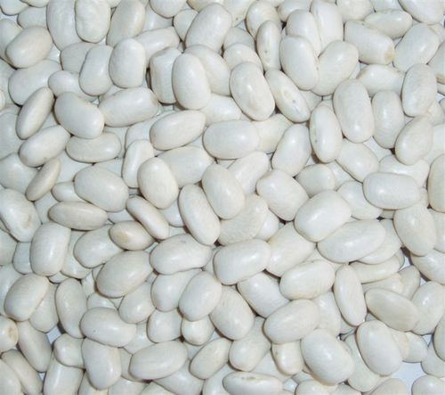 Medium White Kidney Bean