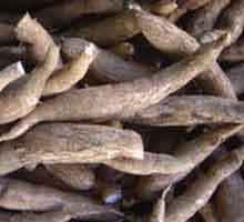Fresh & Dried Cassava