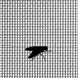 Fly Screen