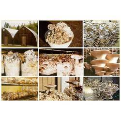 Mushroom Cultivation Process