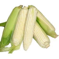 White Corn