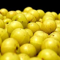 Amla Fruit Juice Powder