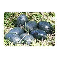 Emu Eggs