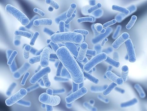 Gut Probiotics