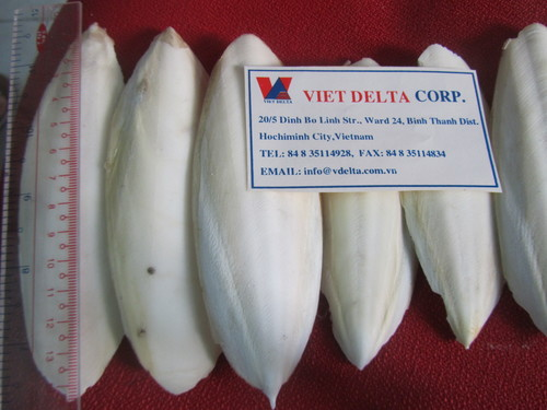 Dry Cuttle Fish Soft Bone For Make Chitosan