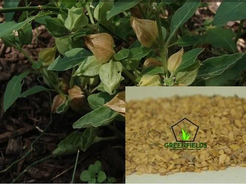 Ashwagandha Medicinal Seeds (withania somnifera)