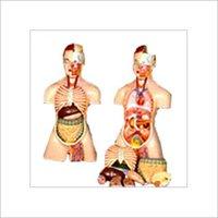 Laboratory Mannequins