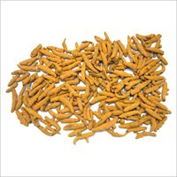Dry Turmeric Finger