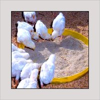 Chick Feed Tray