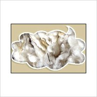 Clipped Sheep Wool