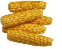 Frozen American Sweet Corn
