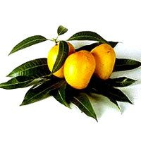 Dasheri Mango