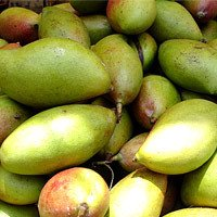 Totapary Mango