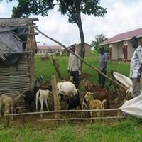 Goat Farming Services