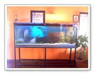 Designer Fish Aquariums