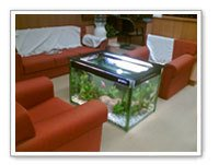 Home Decorative Aquariums