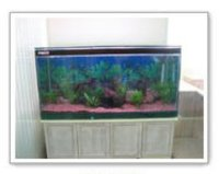 Table Top Aquariums