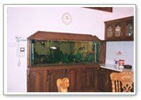 Table Top Designer Aquariums