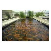 Fish Breeding Films