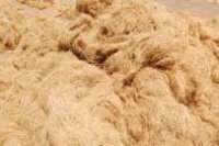 Coir Fiber