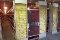 Battery Cage Poultry Equipment