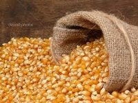 Yellow Maize (Poultry Feed)