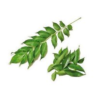 Curry Leaf (Limdo)