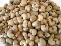 High Quality Cashew Nuts