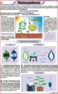 Photosynthesis Chart