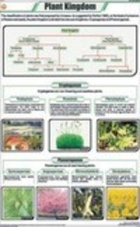 Plant Kingdom Chart