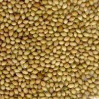 Coriander Seed(Dhania)