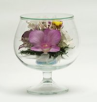 Natural Preserved Orchid Flower