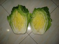 Fresh China Cabbage