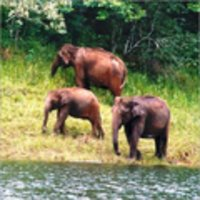 Wildlife Tour Package Service