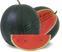 Watermelon Seed (Kyling 175)